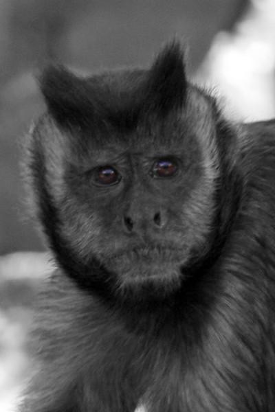 Brown eyed monkey
