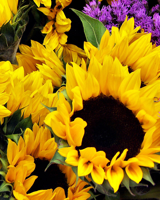 Royal Sunflowers