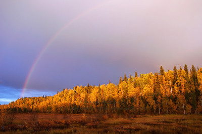 Post-thunderstorm rainbow, autumn, Talkeetna, Alaska.