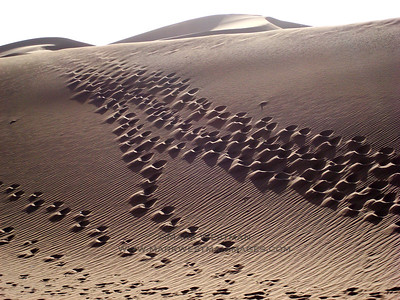 Foot tracks in the sand, Erg Chigaga, Morocco.