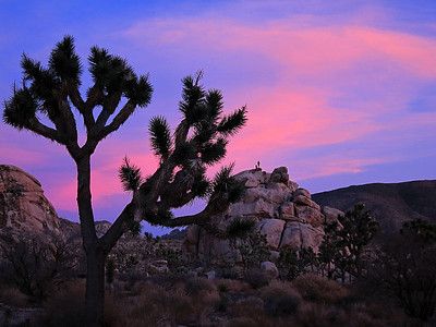 Climbers atop a rock formation at dusk, Joshua Tree National Park, California.