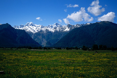 New Zealand's Mount Cook towers above coastal meadows on a rare clear day.