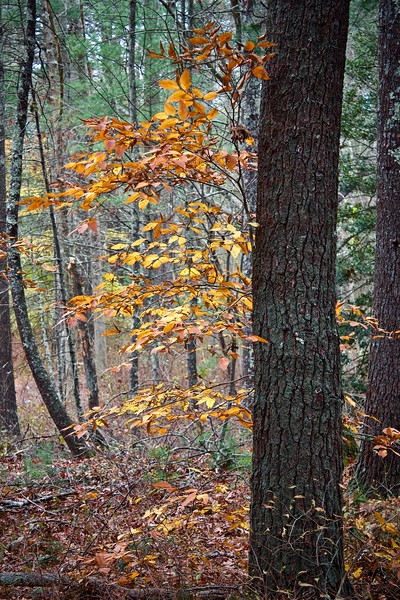 P woods