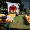 Krupski's Pumpkins