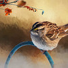 Autumn Sparrow