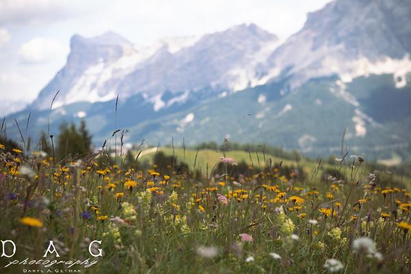 Alpine Wilds