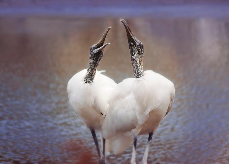 Bird/Animal Photography