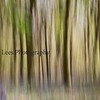 Bluebell woods, Banstead