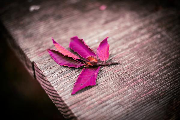 Magenta Leaves
