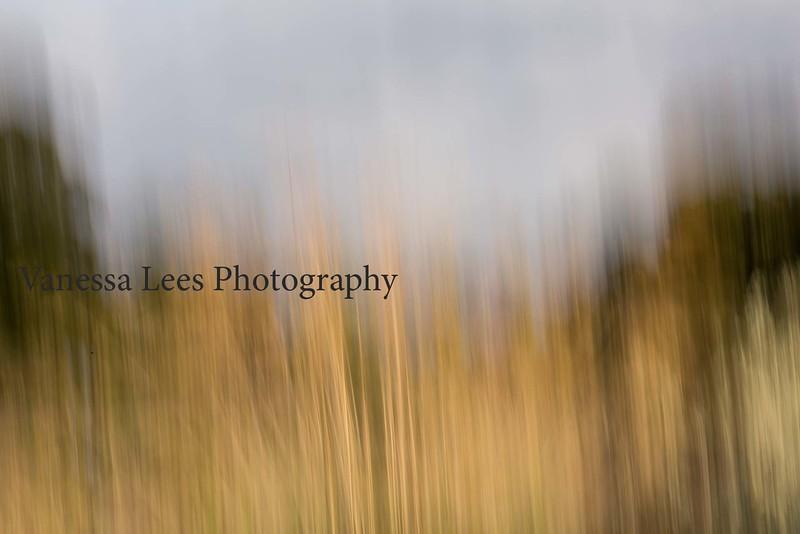 Autumn Grasses, RHS Wisley, Surrey