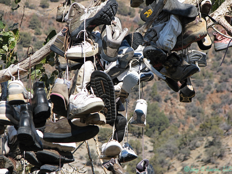 The amazing shoe tree of Central Oregon