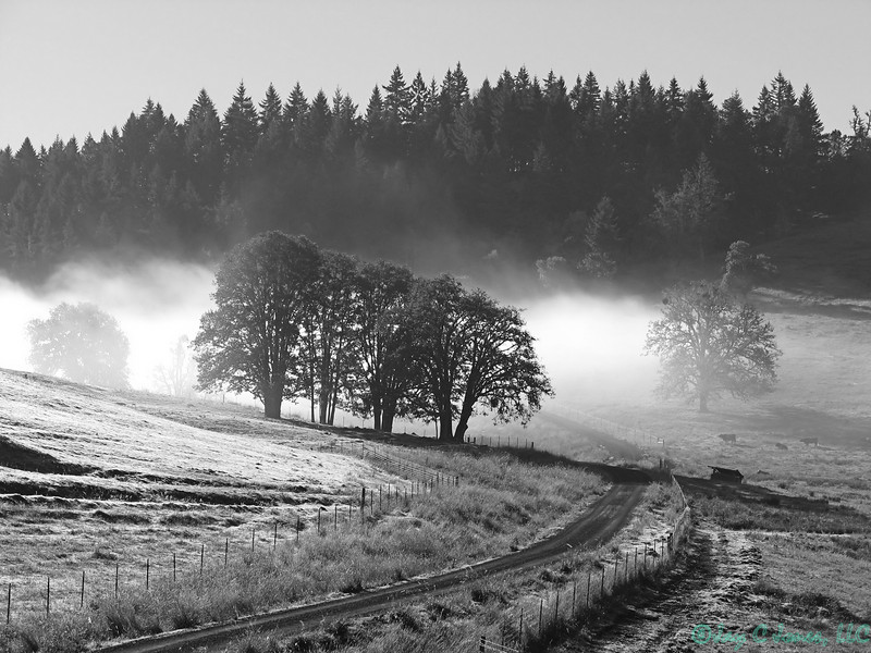 Morning Mist, Glide, Oregon