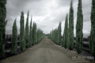 Road to Corte Pavone Tuscany, Italy S163-1390c
