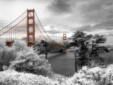 Golden Gate from the Presidio San Francisco, California #S126-3-11c