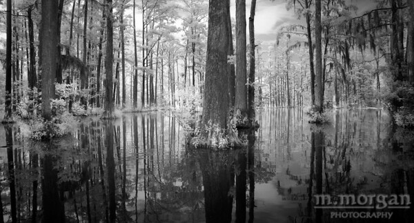 Cypress Gardens Swamp II Moncks Corner, South Carolina S185-3933