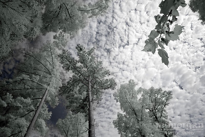 Sky View from Cypress Gardens Moncks Corner, South Carolina S185-4026c