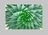1823-Spiral Aloe v6