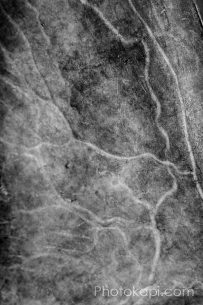 Caribou Antler Detail