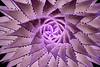 1823-Spiral Aloe v5b Invert
