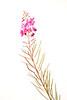 0608-3695 Purple Wild Flower Master