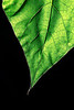 Leaf-Master-v2-1580