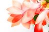 5126-Pink Christmas Master