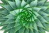 1823-Spiral Aloe v5 Master