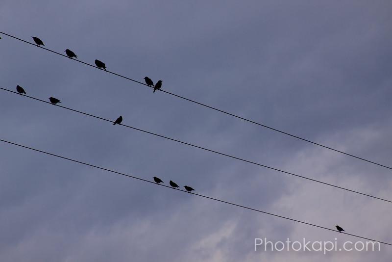 Avian Tune