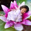 Little Fairy Alana