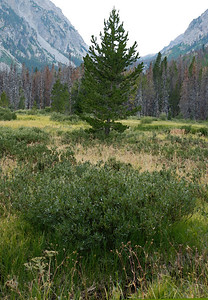 Meadow near Marsh, Silverthorne, Colorado.  2009