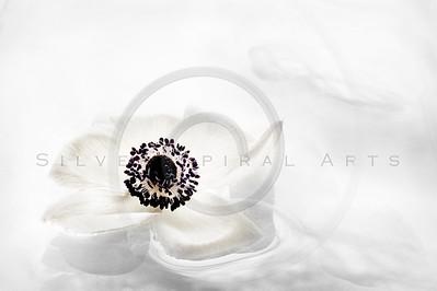 Serene Anemone Series 1
