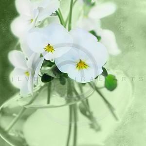 Spring Violets Series 2