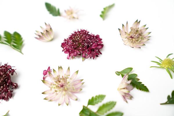 Burgundy Blooms (9)