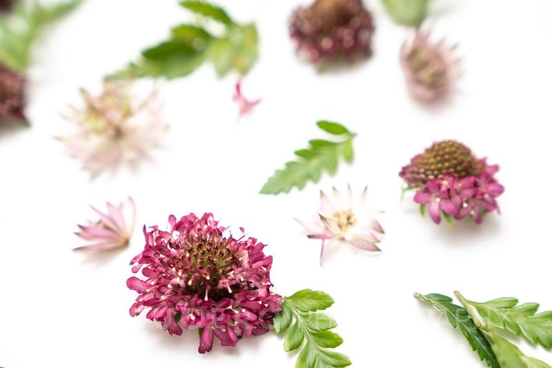 Burgundy Blooms (5)