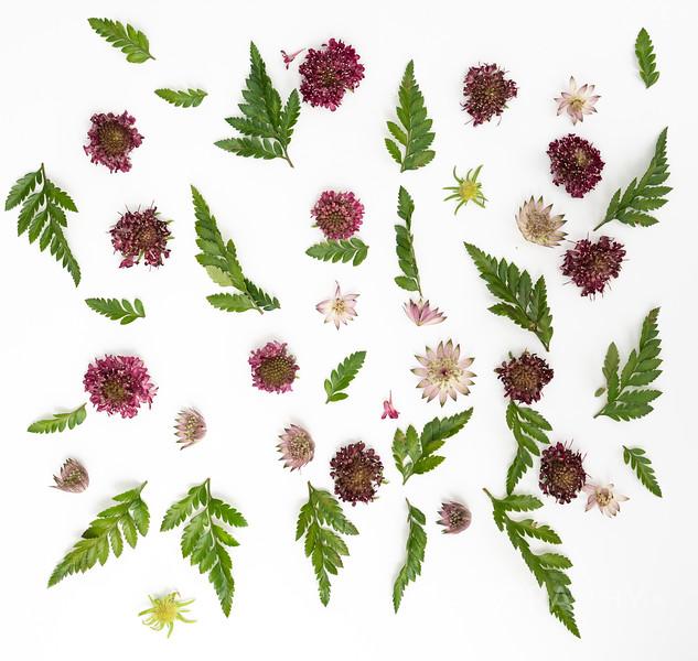 Burgundy Blooms (2)