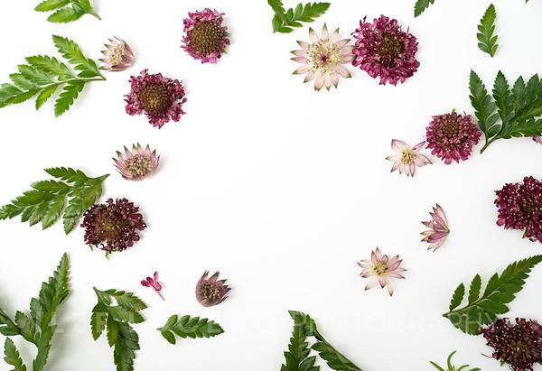 Burgundy Blooms (7)