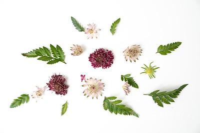 Burgundy Blooms (8)