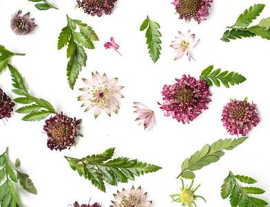Burgundy Blooms (6)