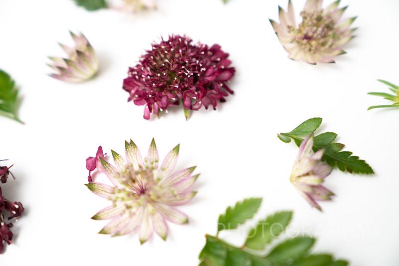 Burgundy Blooms (10)