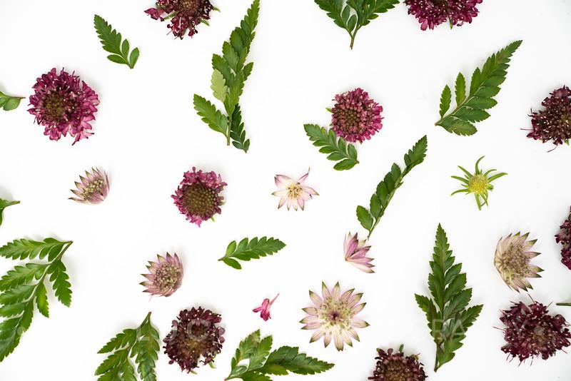 Burgundy Blooms (3)