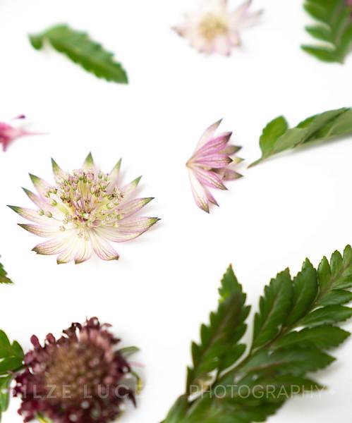 Burgundy Blooms (4)