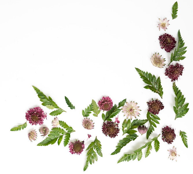 Burgundy Blooms (1)