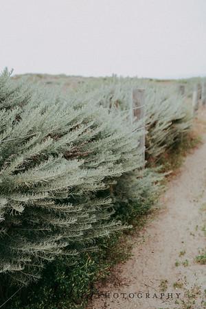 derksen photography stock photo-1
