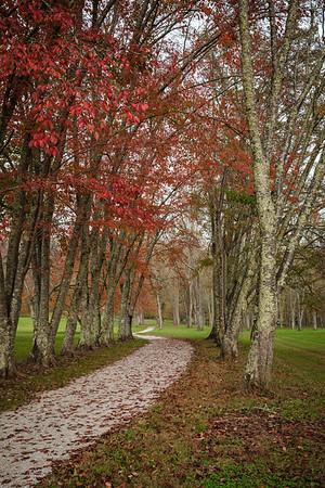 Song Bird Trail near Norris Dam.  Black cherry tree grove.