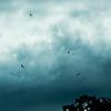 Birds Circling After Storm