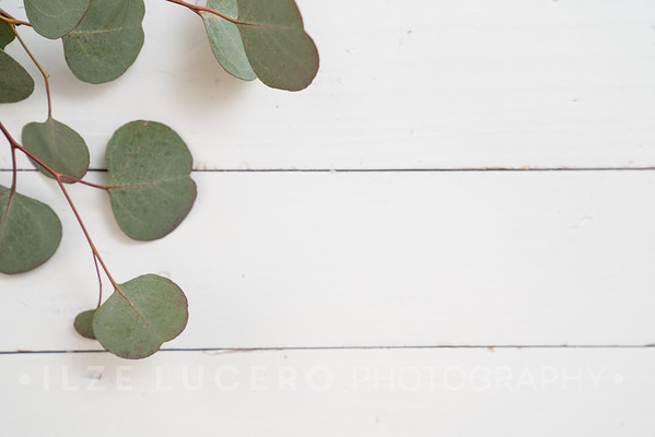 Eucalyptus (9)