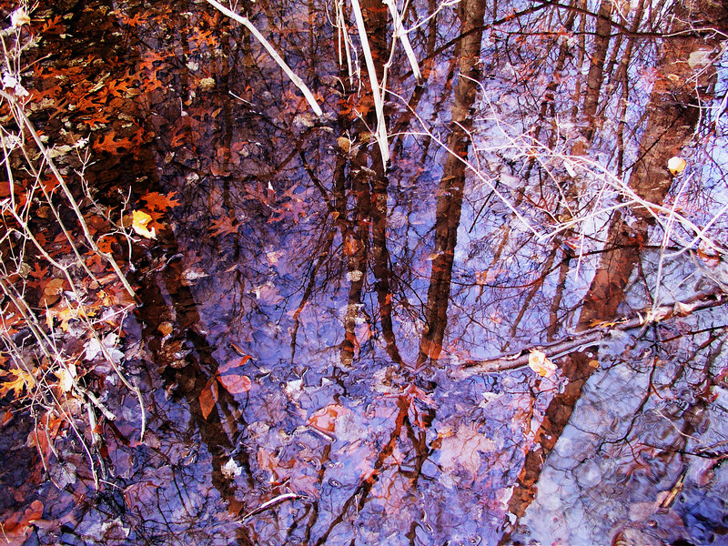 Tall trees reflected in a pool of water