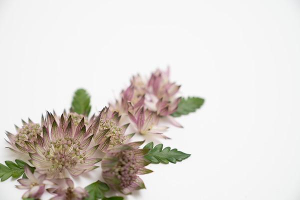 Flower Power (14)