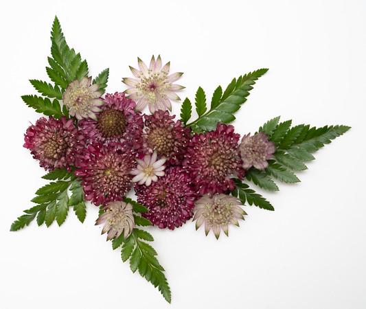 Flower Power (1)