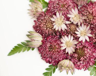 Flower Power (3)